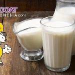 Higoat Pentingkah Minum Susu Secara Rutin bagi Usia Produktif?
